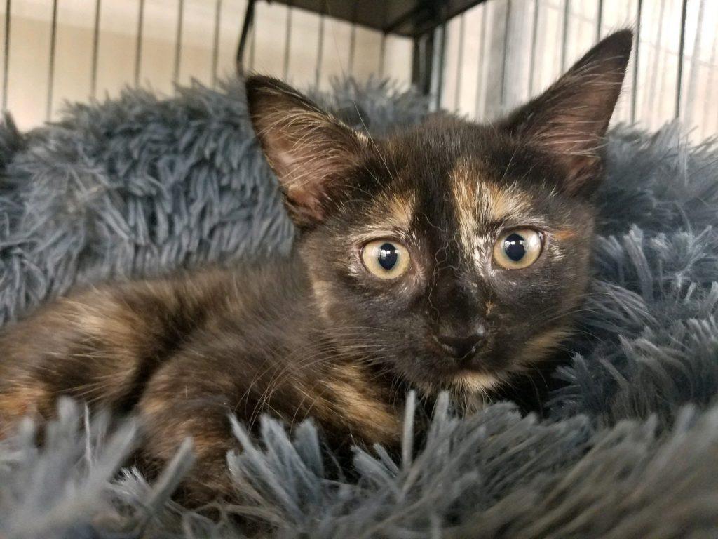 Long Island Feline Adoption Center